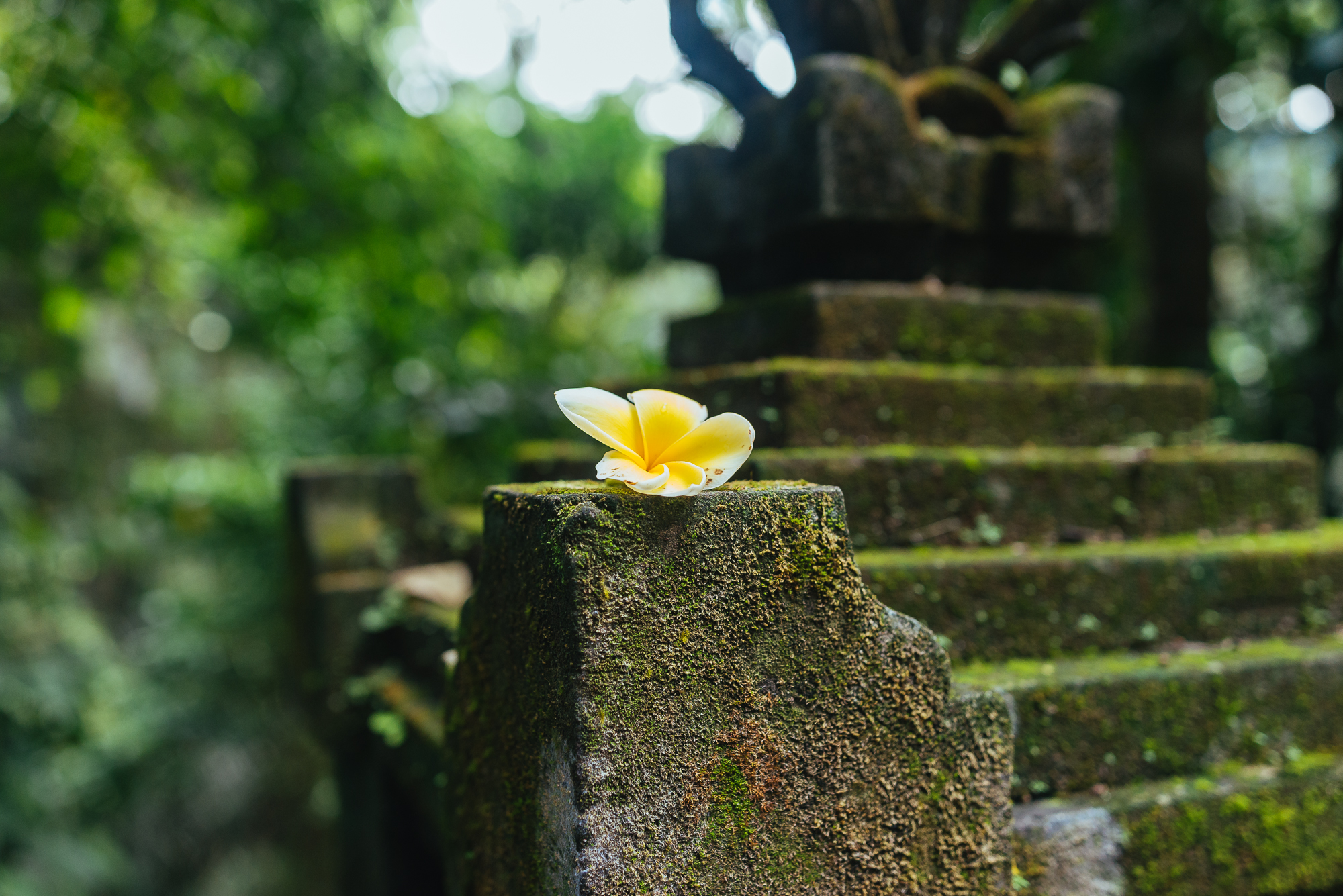 indonesia_2017-450.jpg