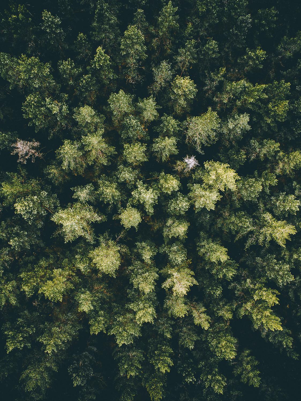 Fine Art Forest