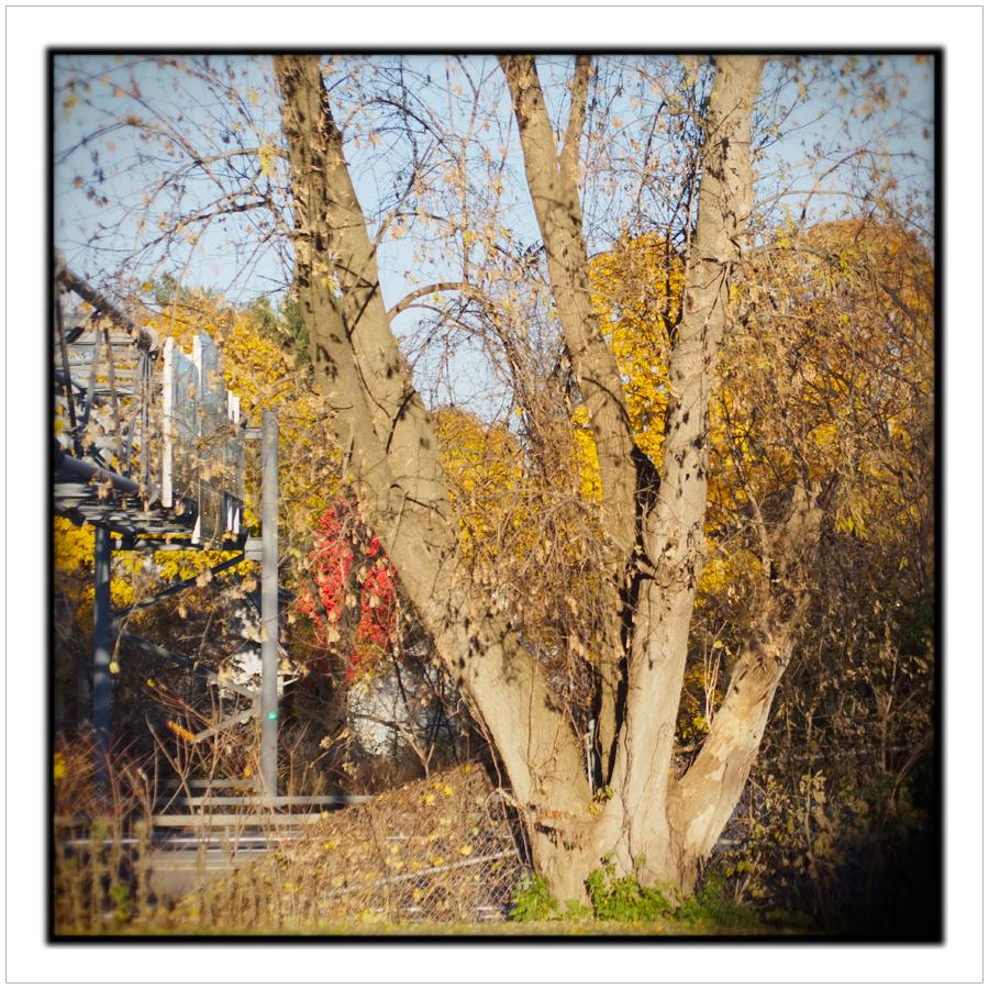 urban view ~ Utica, NY (click to embiggen)