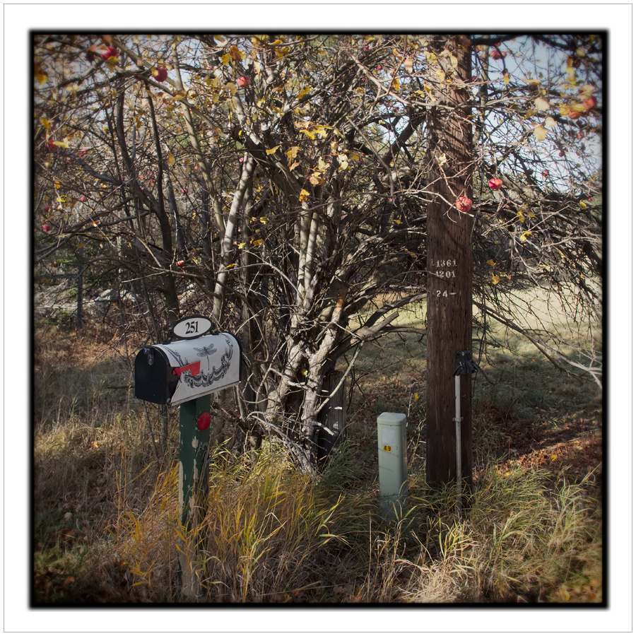 roadside things   ~ Ore Bed Rd / Redford, NY - in the Adirondack PARK (click to embiggen)