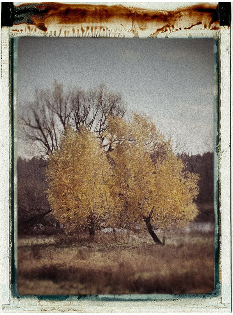 2 trees   ~ Ft. Covington, NY (click to embiggen)