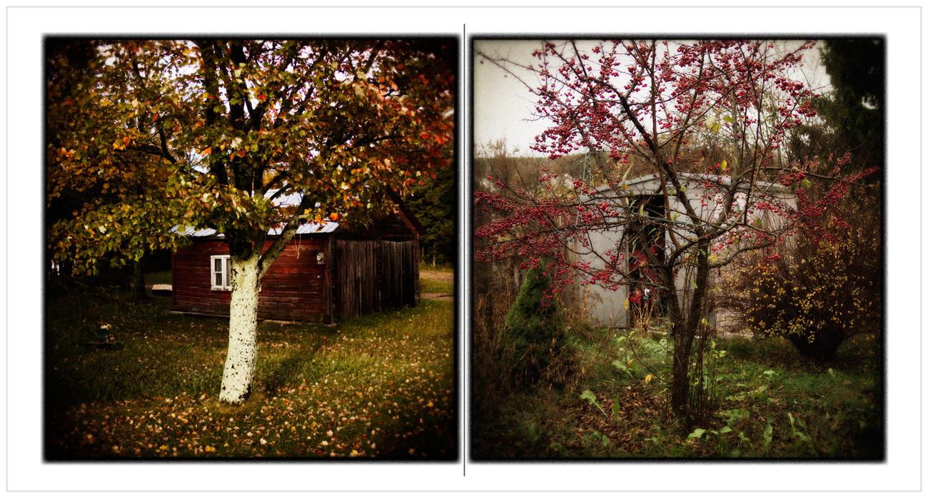 autumn / cherries ~   instagram filter