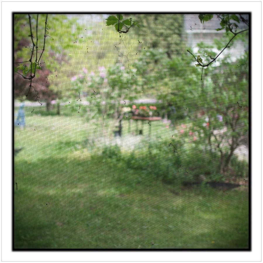 yard through screen   ~ Chaffey's Lock, ONT CA (embiggenable)