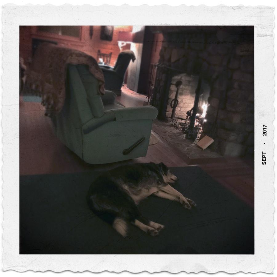 Ryder sleeping   / Rist camp
