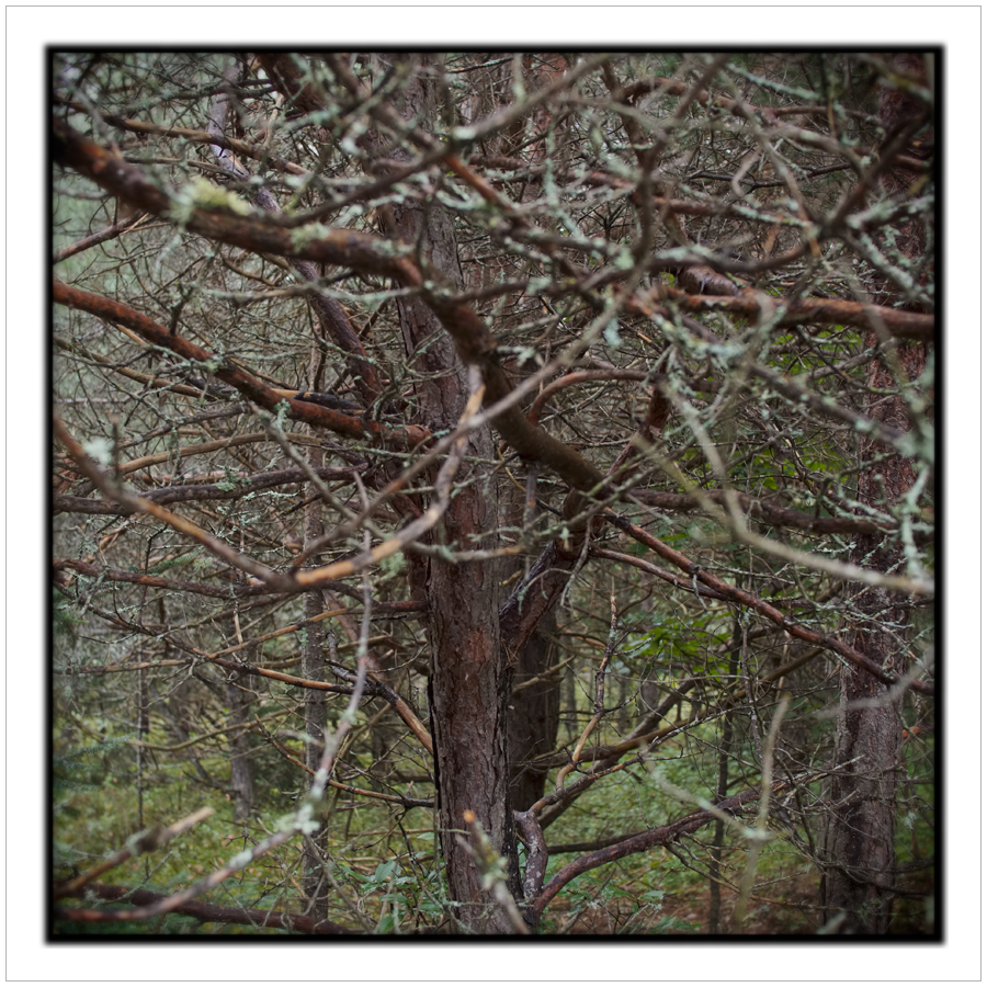 tree   /   Wild Cente  r ~ Tupper Lake, NY - in the Adirondack PARK (embiggenable)