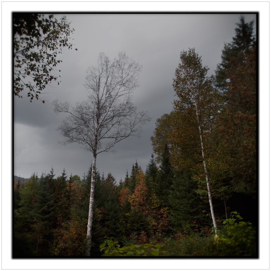 the gloaming   /   Rist Camp   ~ Newcomb, NY - in the Adirondack PARK (embiggenable) µ4/3
