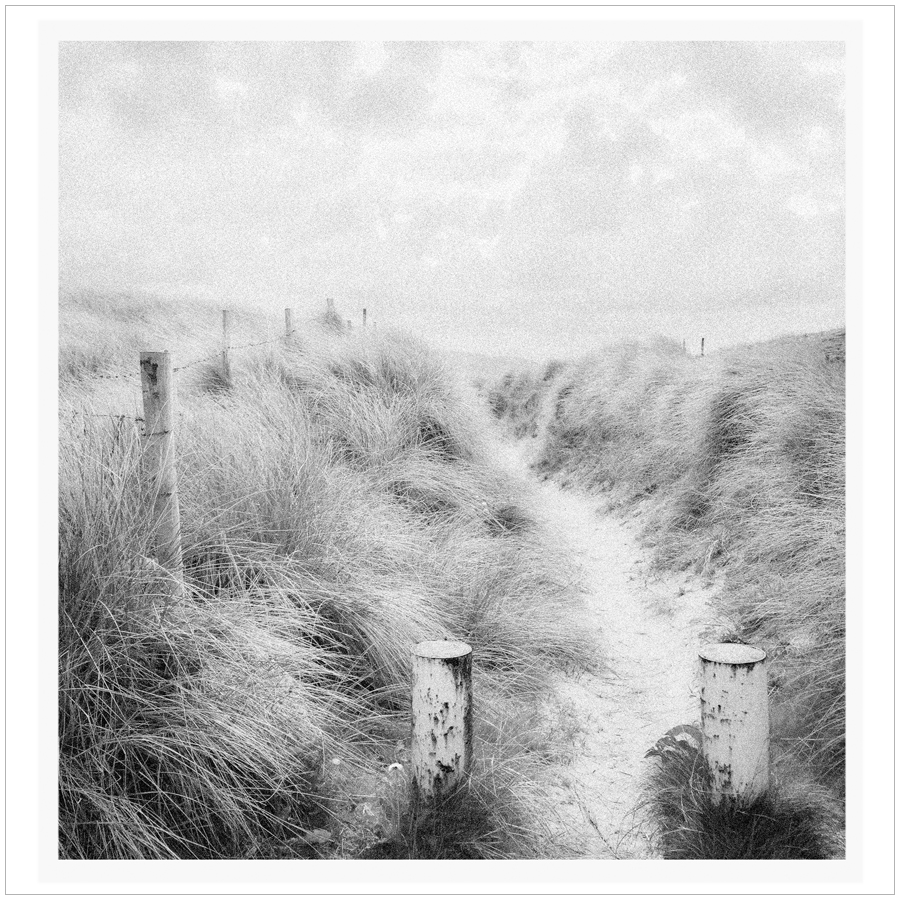 dune path   ~ near Ardara, Ireland (embiggenable) • µ4/3