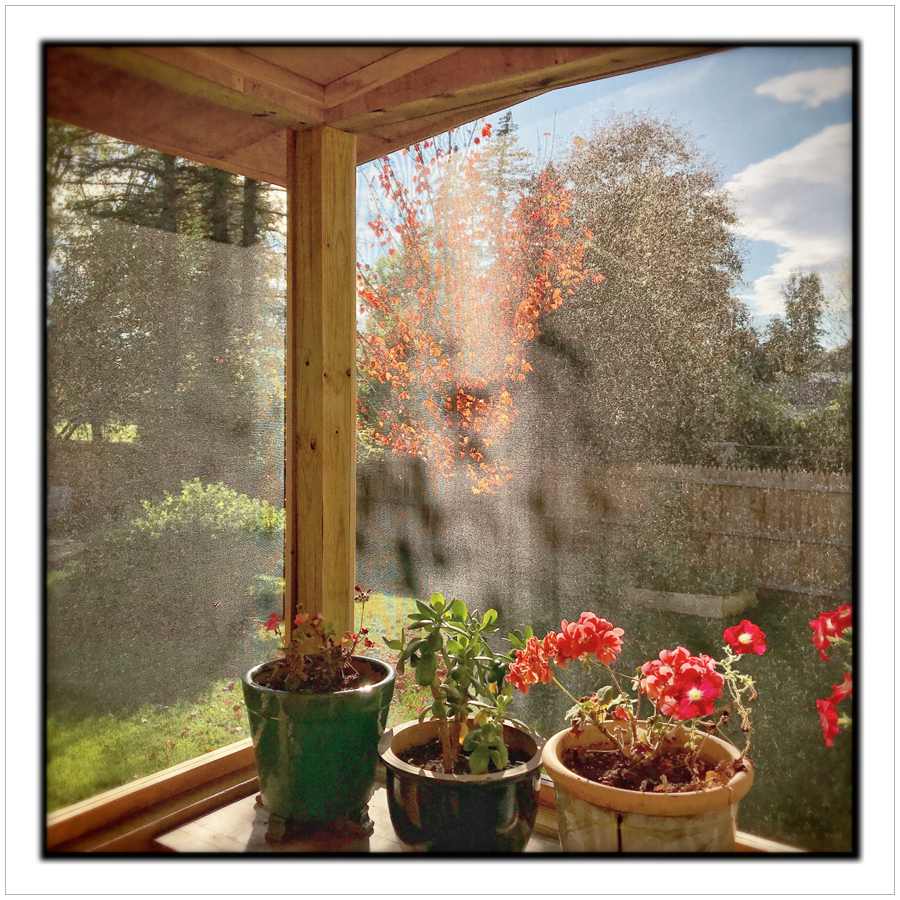 maple tree thru porch screen   ~ in the Adirondack PARK (embiggenable) • iPhone