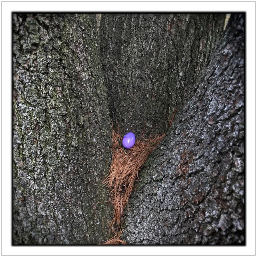 plastic egg   ~ Harrington Park (embiggenable) • iPhone
