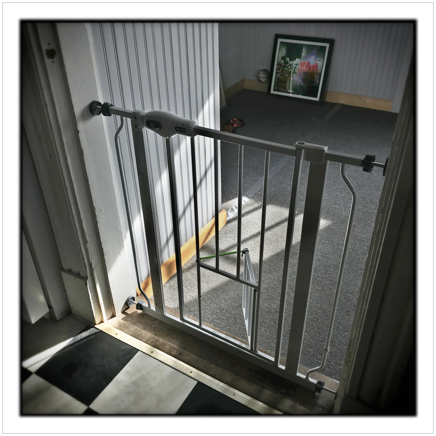 pet gate   ~ (embiggenable) • iPhone