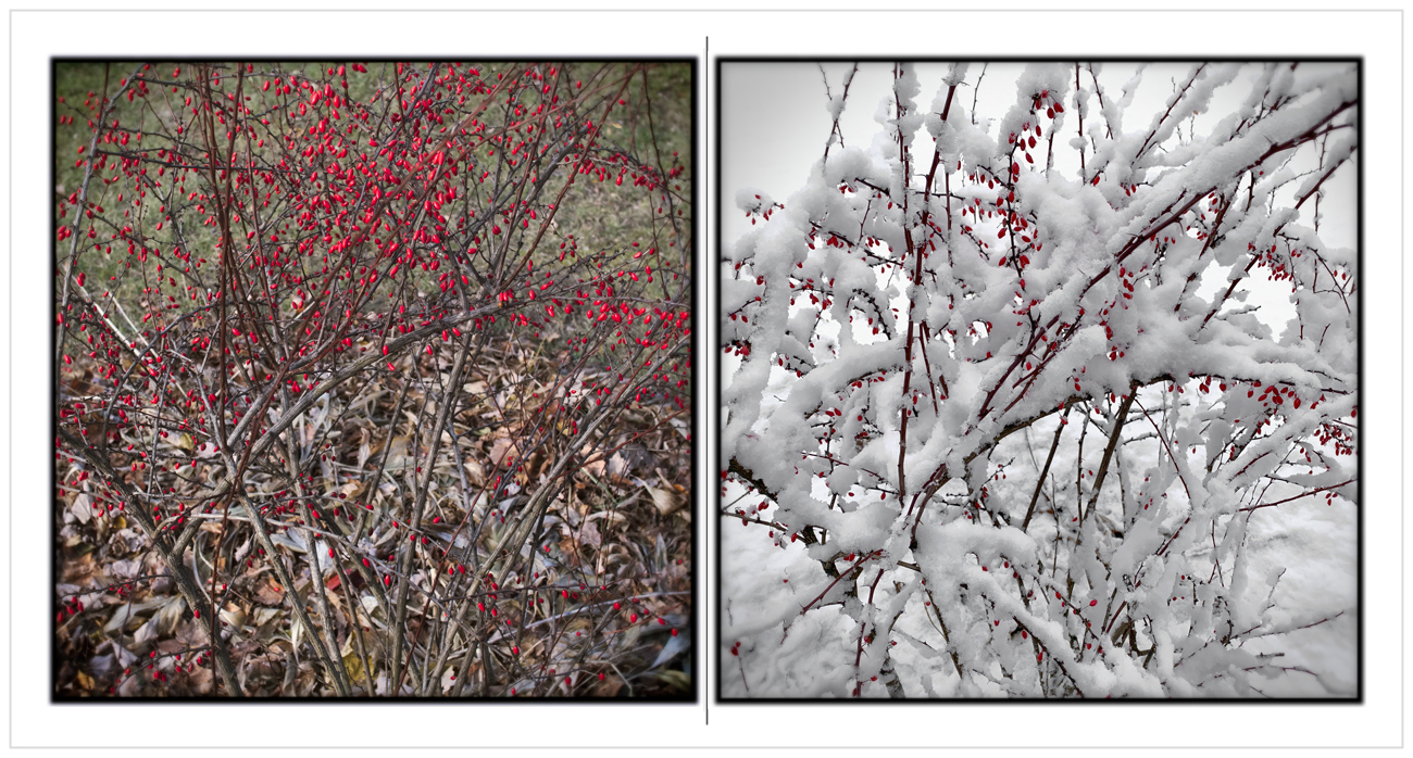 yesterday   /   today   ~ (embiggenable) • µ4/3 (L) / iPhone (R)