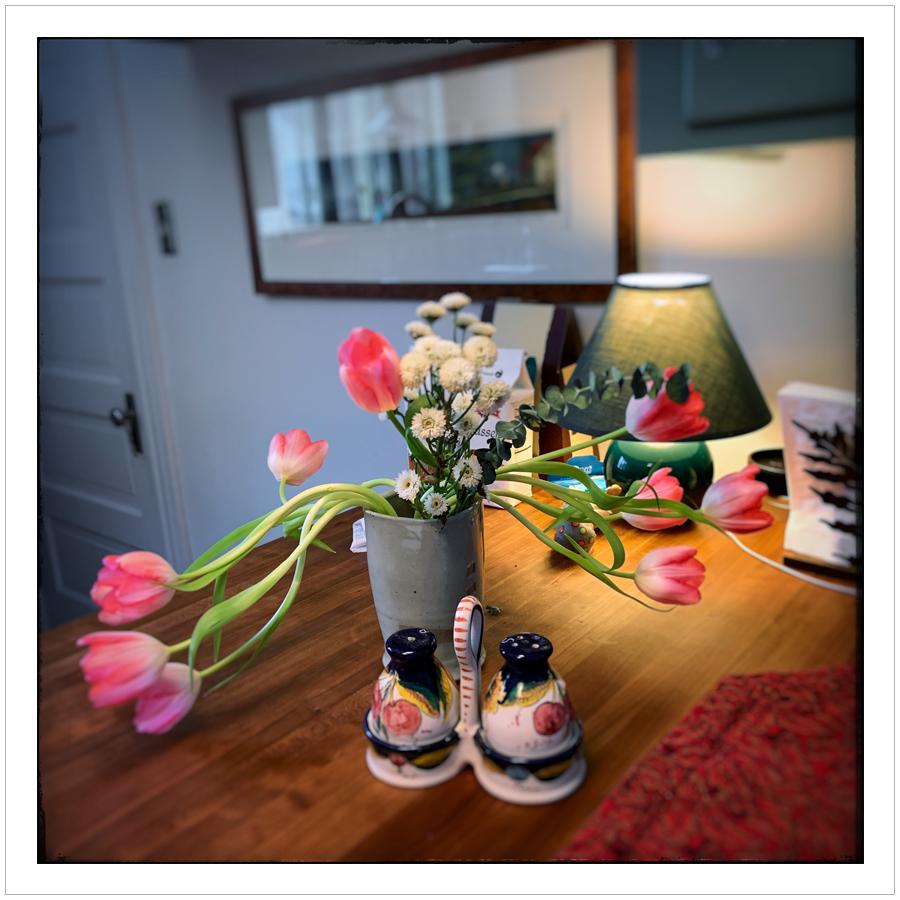 tulips   ~ (embiggenable) • iPhone