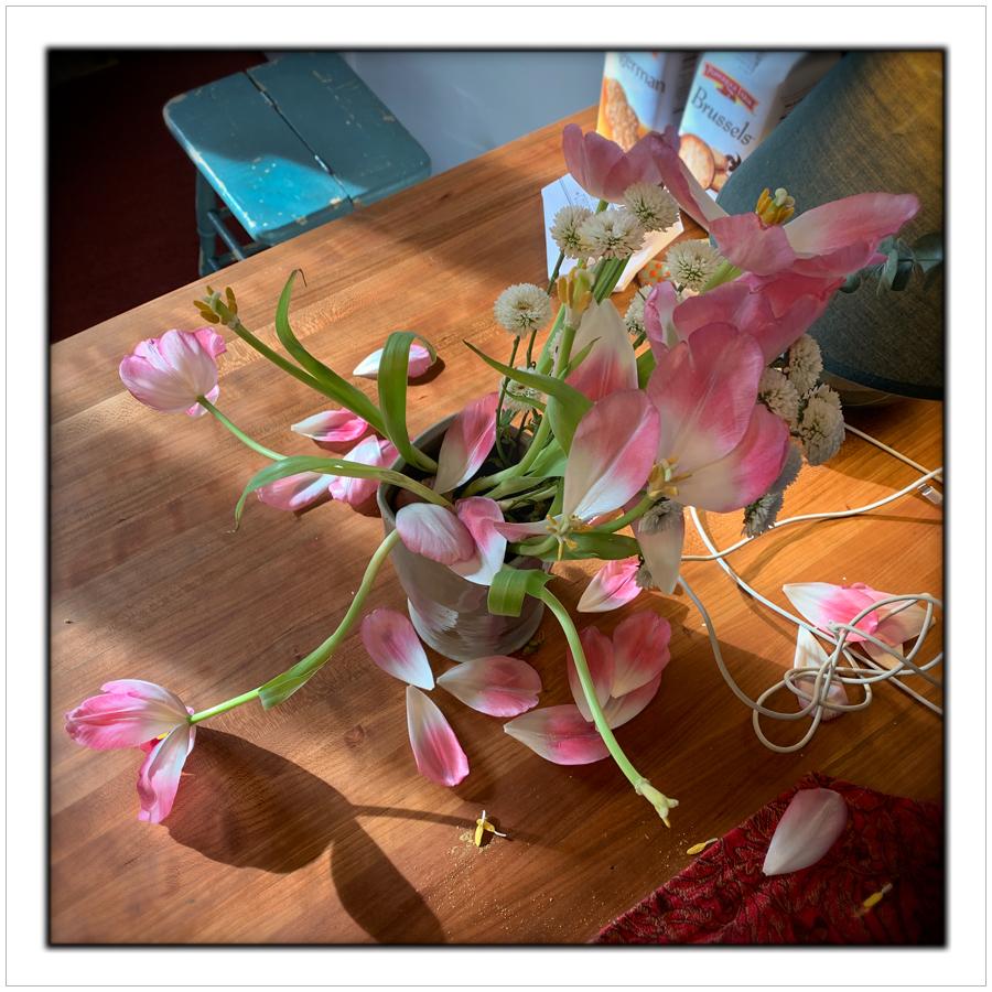 fading tulips   ~ (embiggenable)• iPhone
