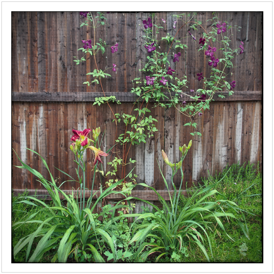 along the fence   ~ (embiggenable)