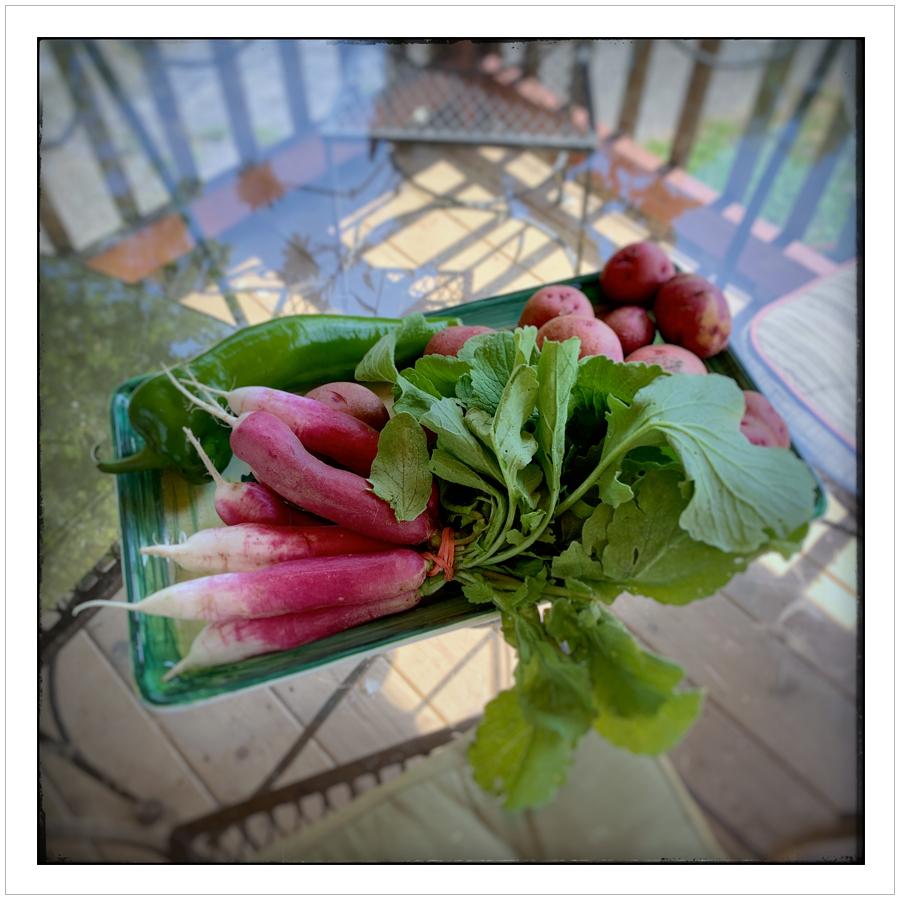 frenchradish.jpg