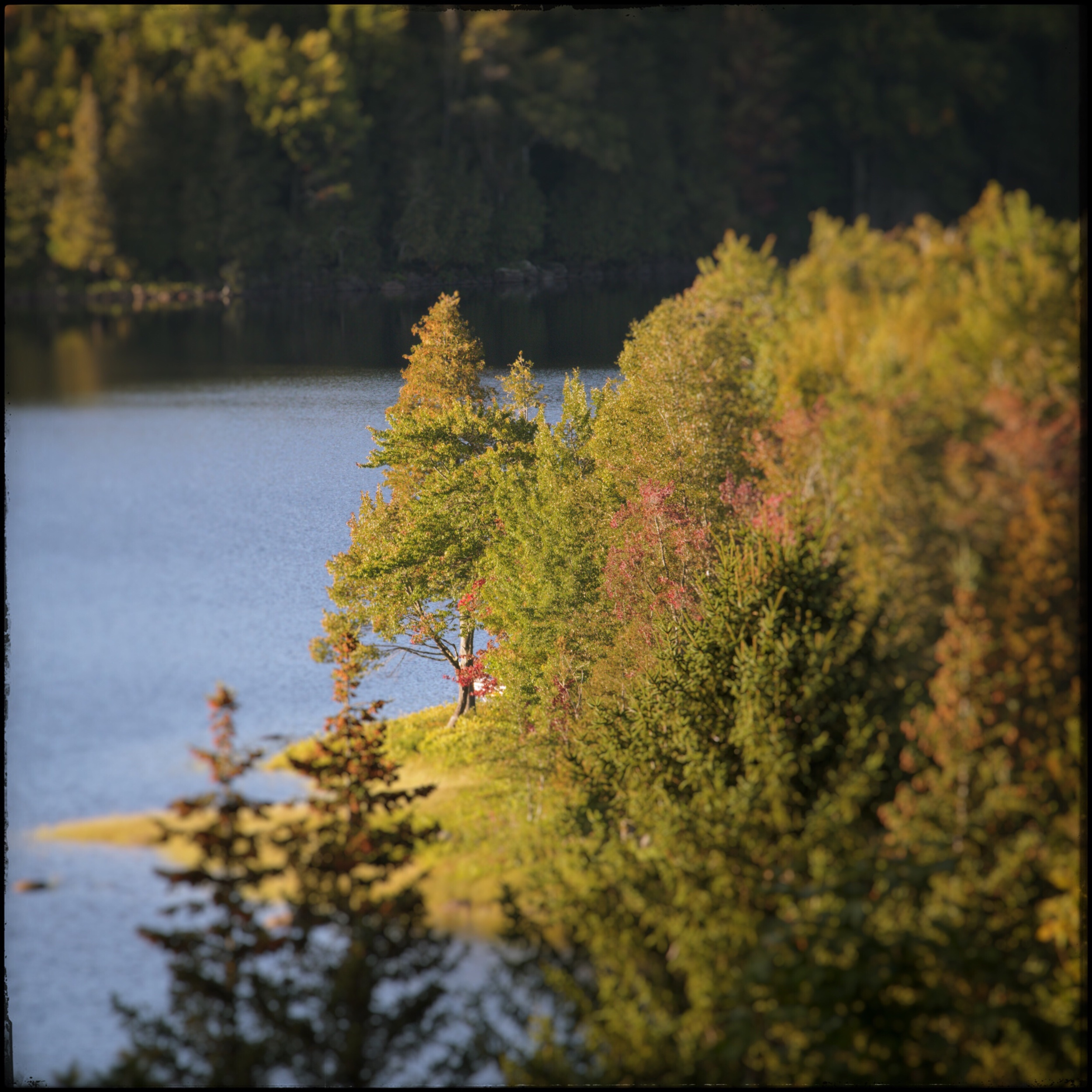early evening sunlight   ~ Harris Lake / Newcomb, NY - in the Adirondack PARK  (embiggenable) • µ4/3 @ 400mm f8