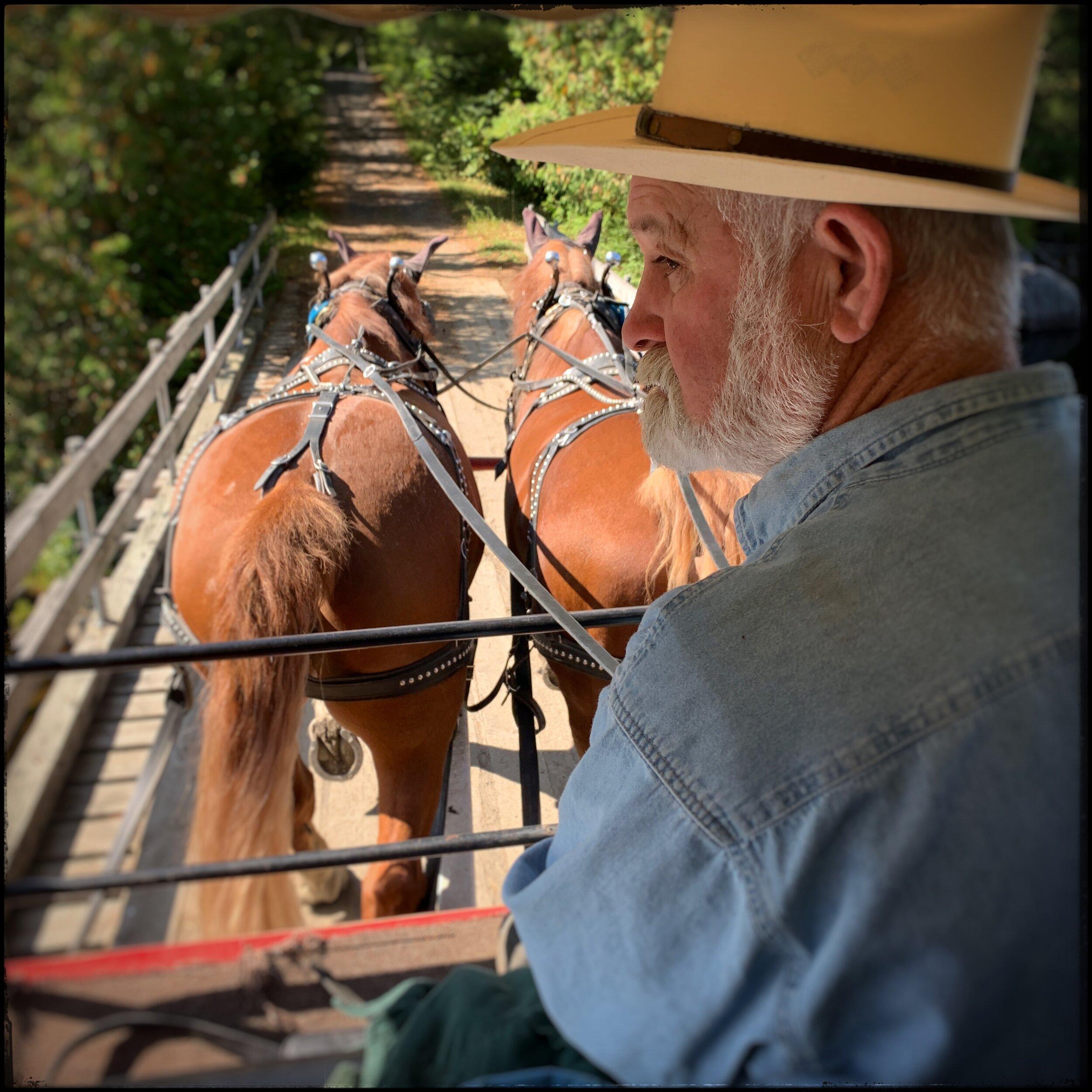 Truman and Jim - Suffolk horses ~   (embiggenable ) • iPhone