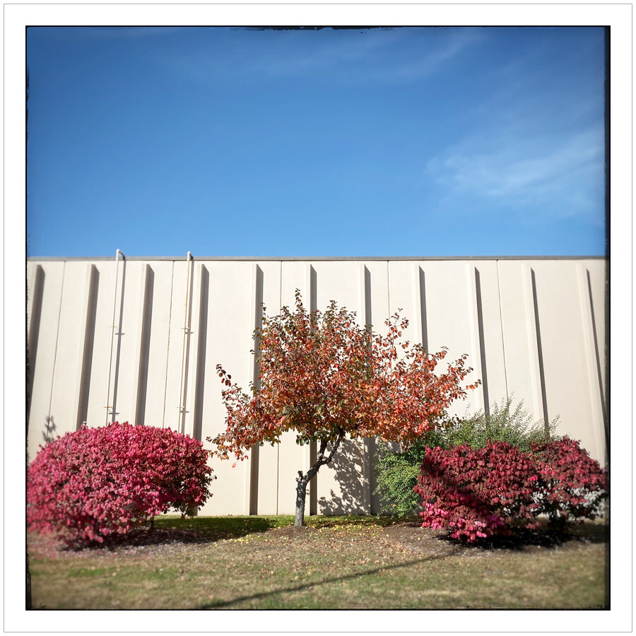 mall wall shrubbery