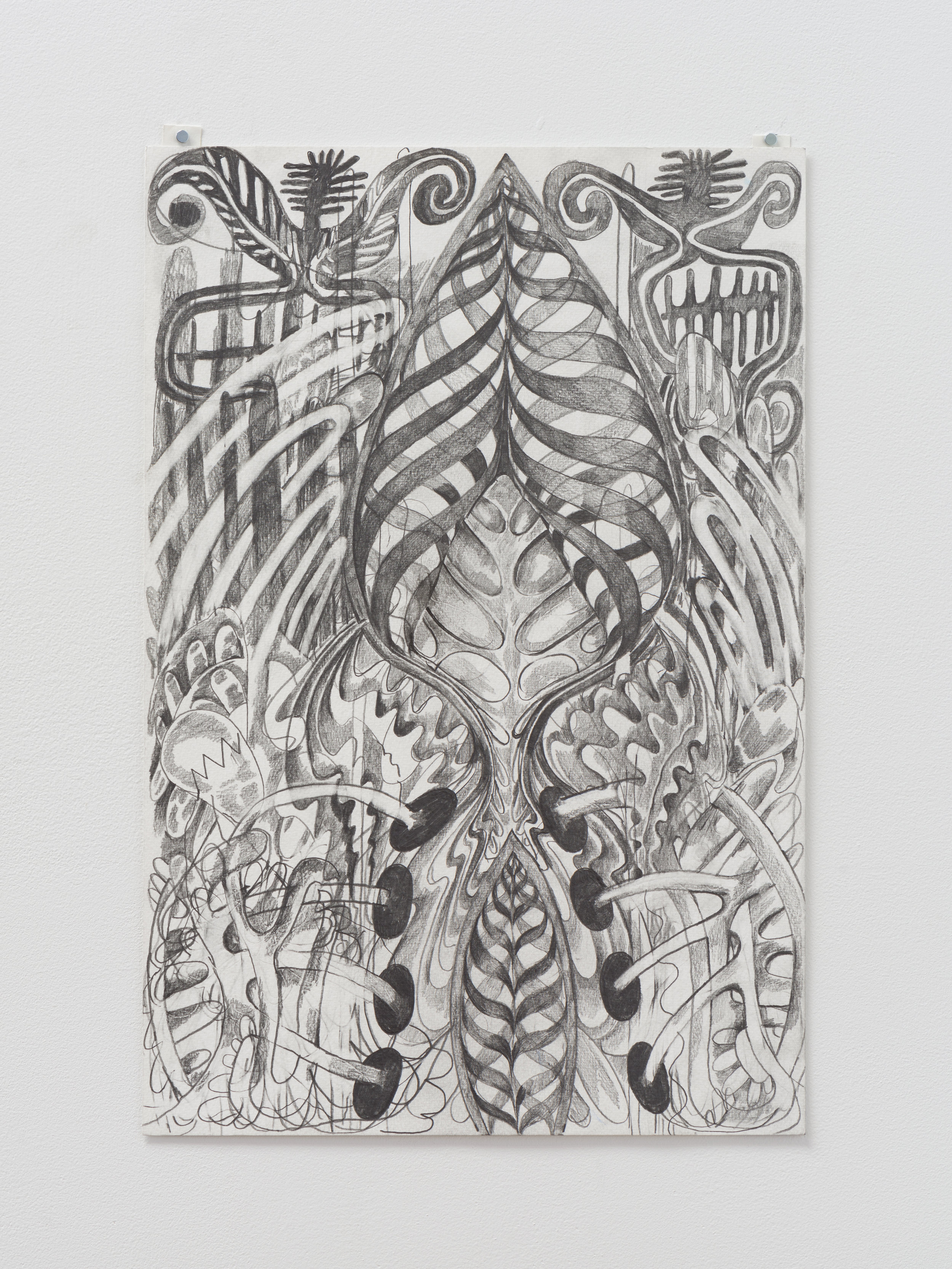 Daniel Ingroff    Spare Ribs   2017 Graphite on paper 18 x 12 inches