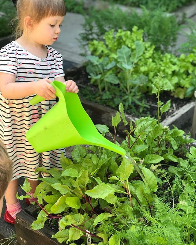 """When one tugs at a single thing in nature, he finds it attached to the rest of the world"" -John Muir #reggioinspired #nature #learningoutside #preschool #gardening"