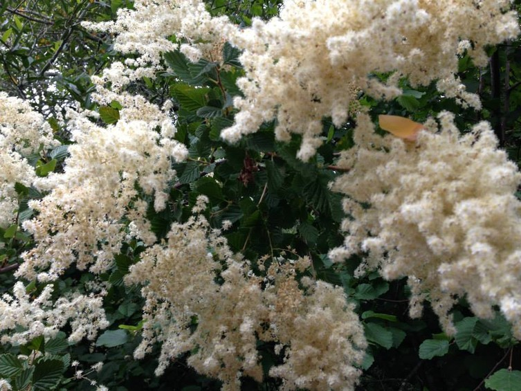 754_BWS_stinson_flowers.jpg