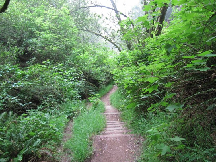 754_BWS_stinson_trail.jpg