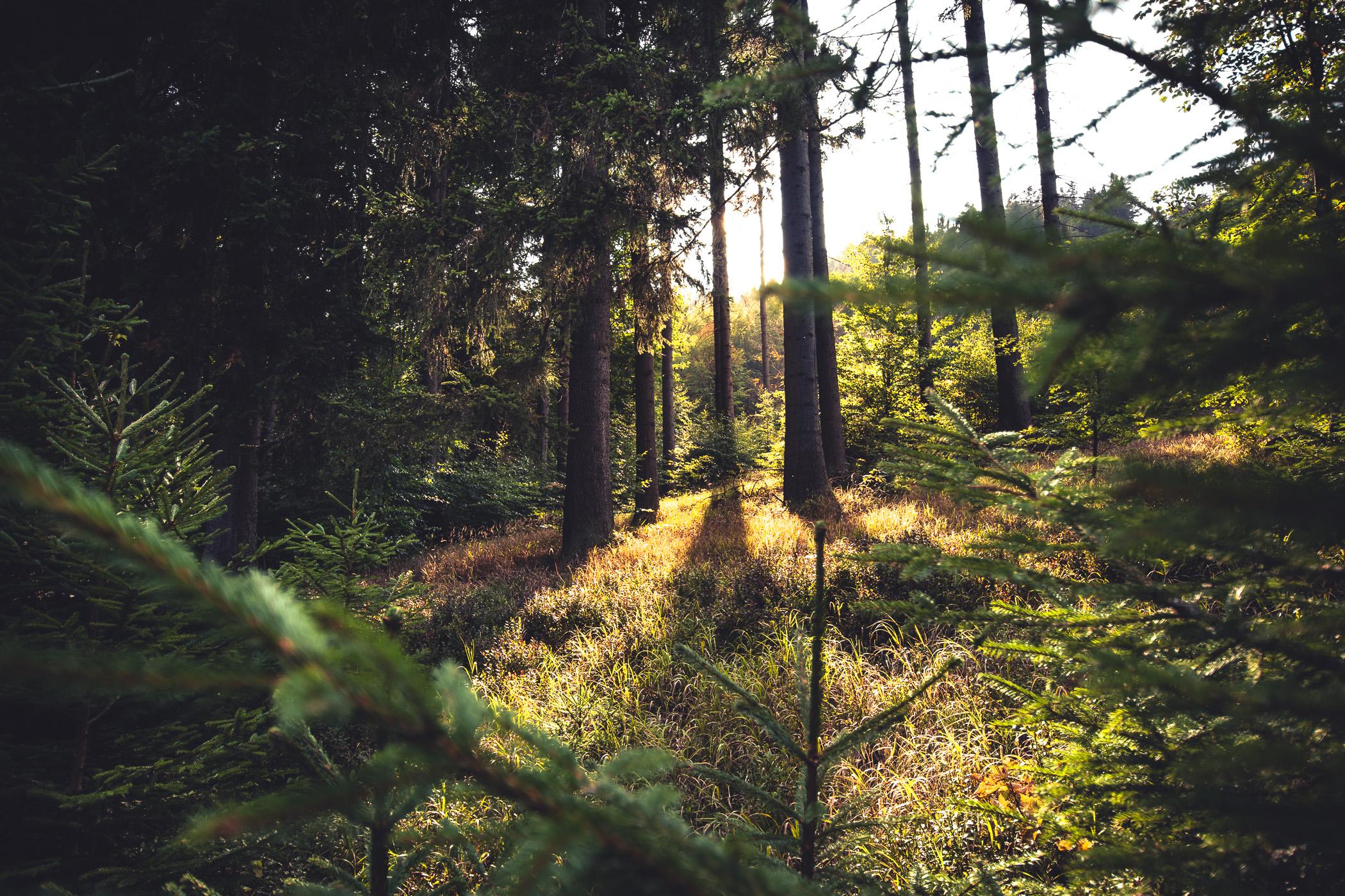 28-09-2018_behind_the_tree_Orlicke_hory_sq.jpg