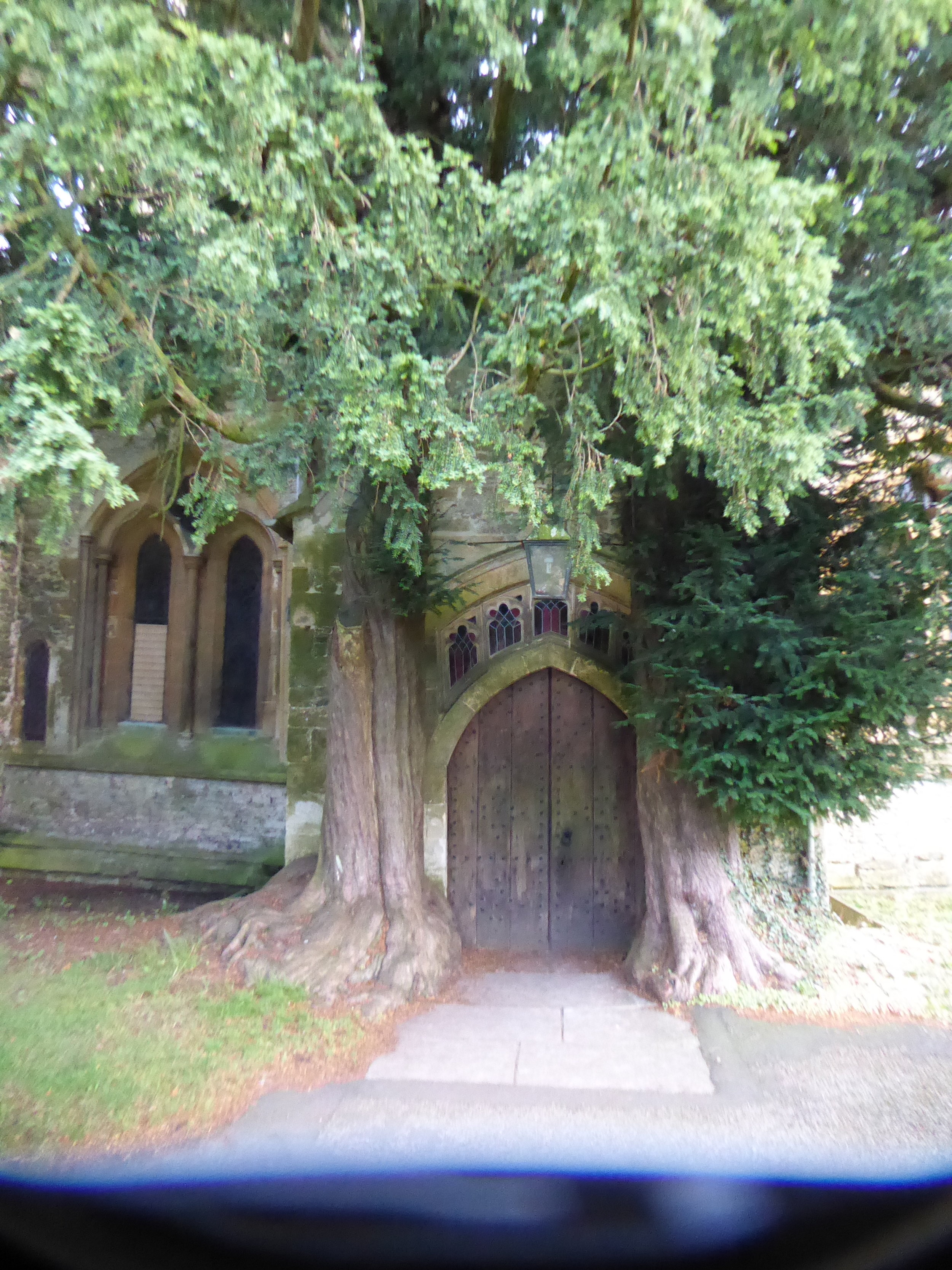 Ancient and marvelous Yew trees, like these, that were supposedly an inspiration for J.R.R. Tolkien.