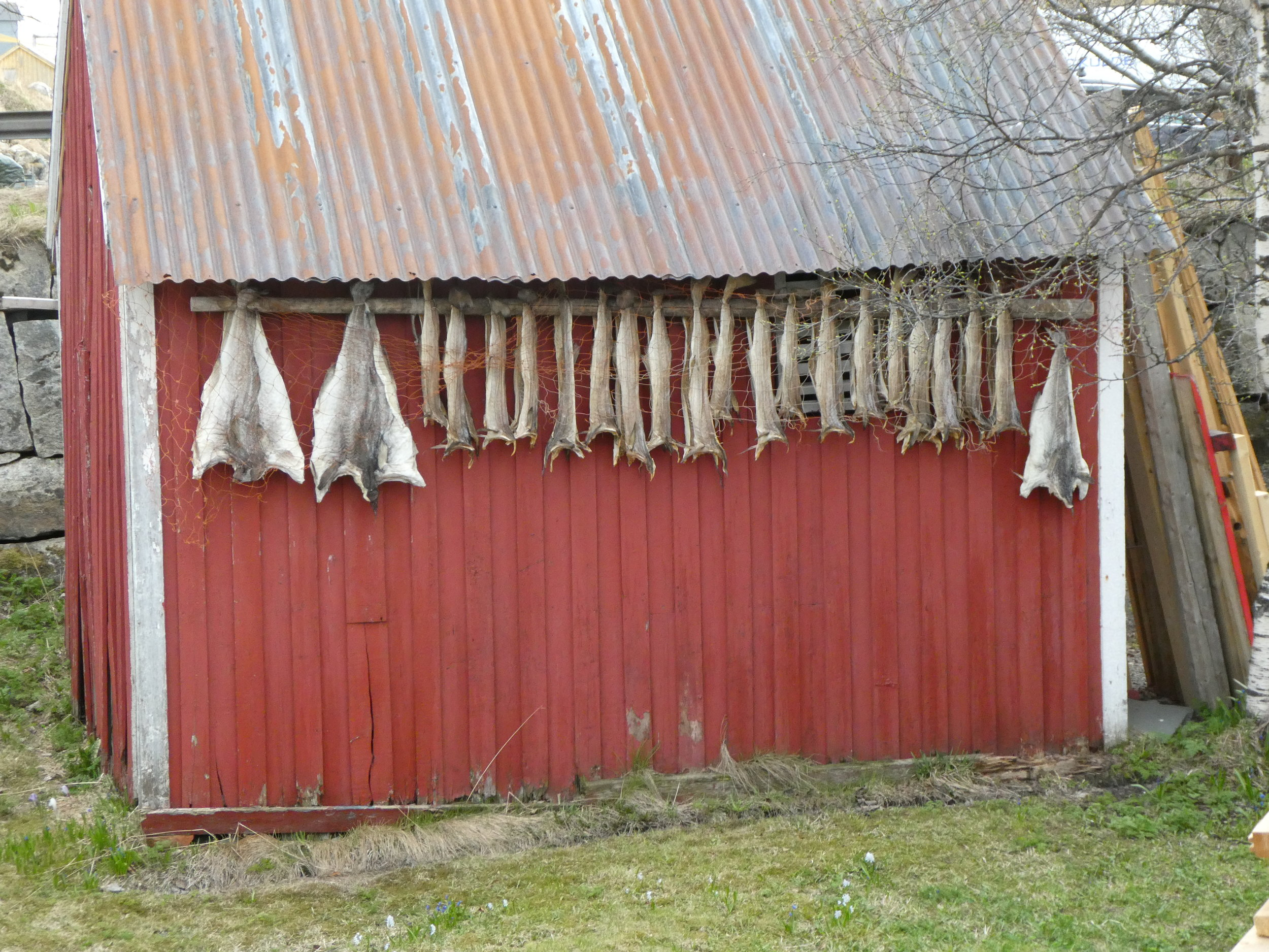 Supposedly a source of national pride, stockfish (air-dried cod) is ubiquitous throughout this part of Norway.
