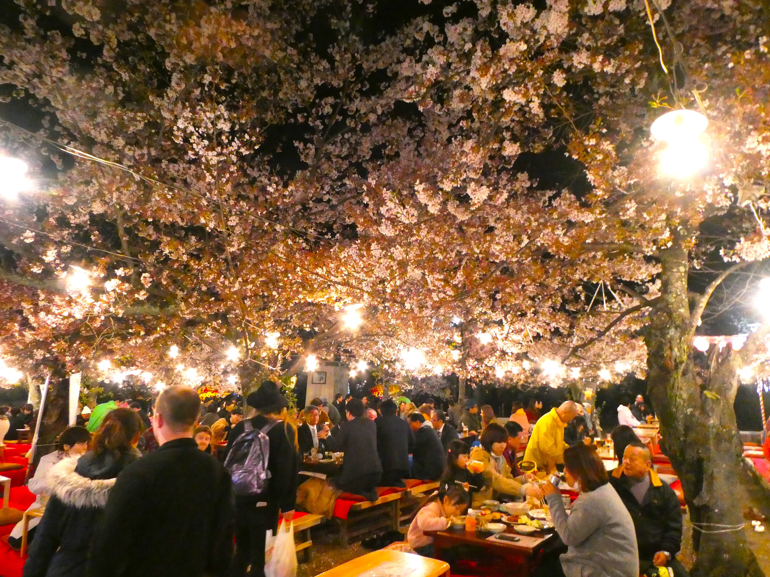 During cherry blossom time, many impromptu beer gardens spring up beneath the blossoms.