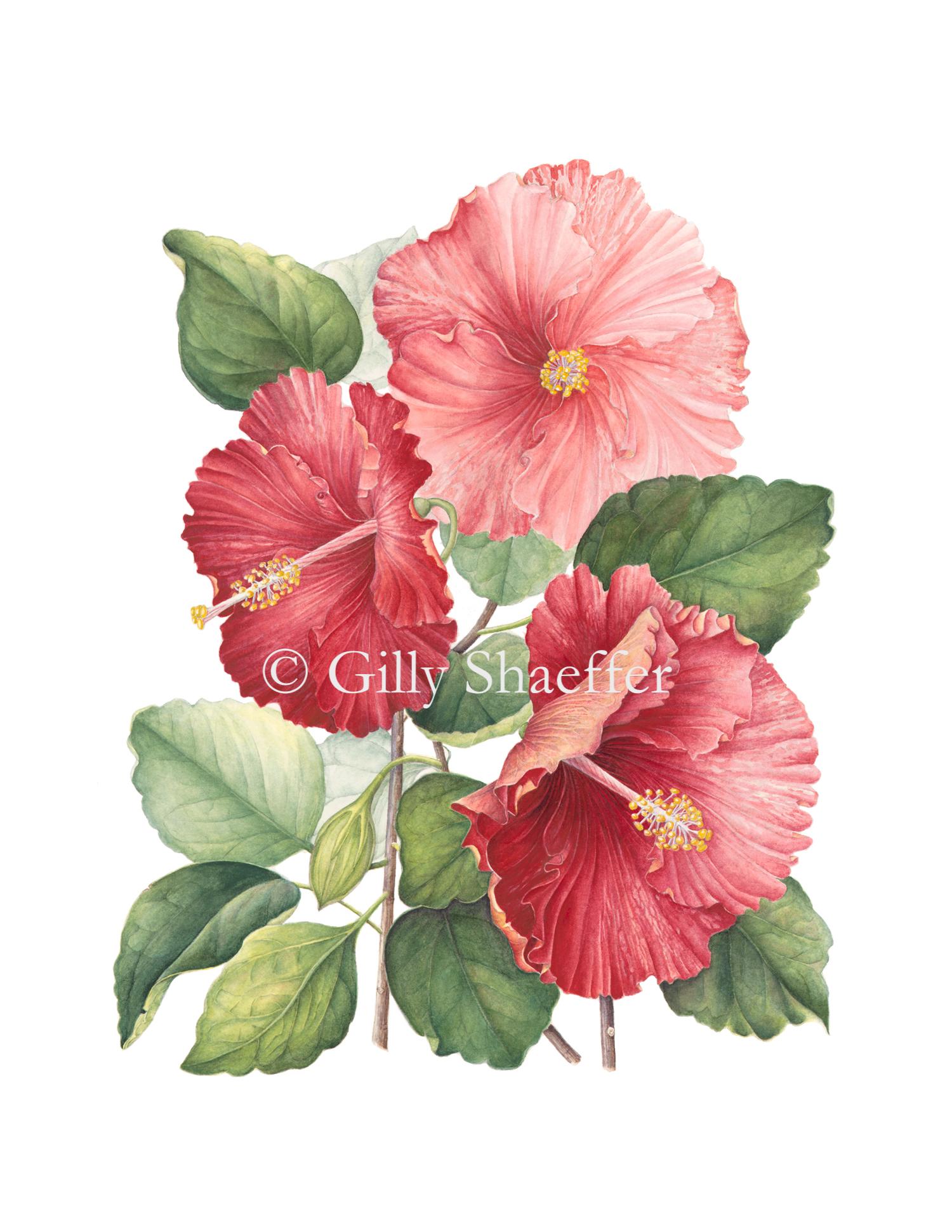 3-hibiscus copy.jpg