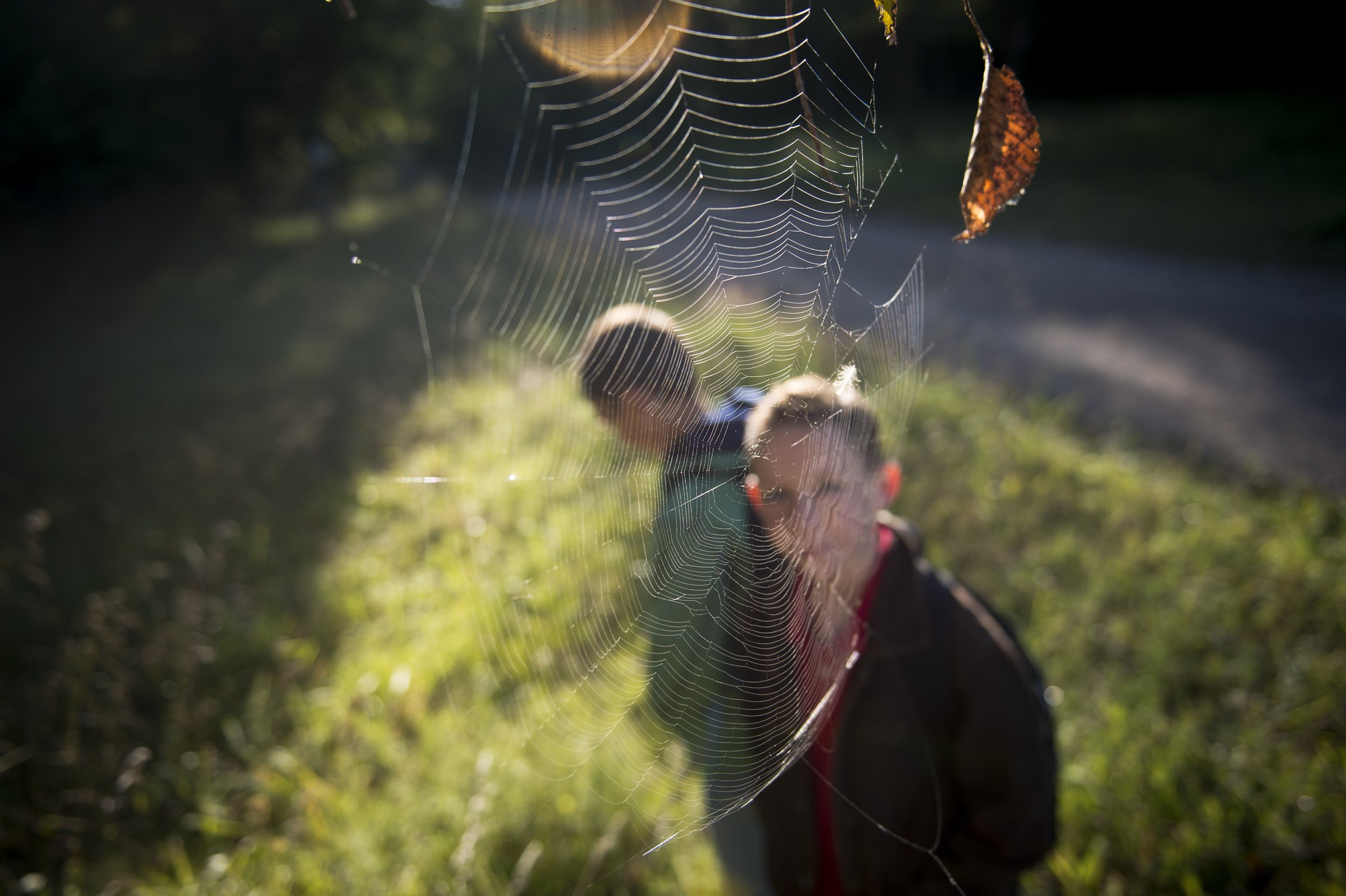 Liam notices a spider web on his walk to the school bus stop early in the morning. When he was 2-years-old, Liam had been in and out of nine foster homes already.