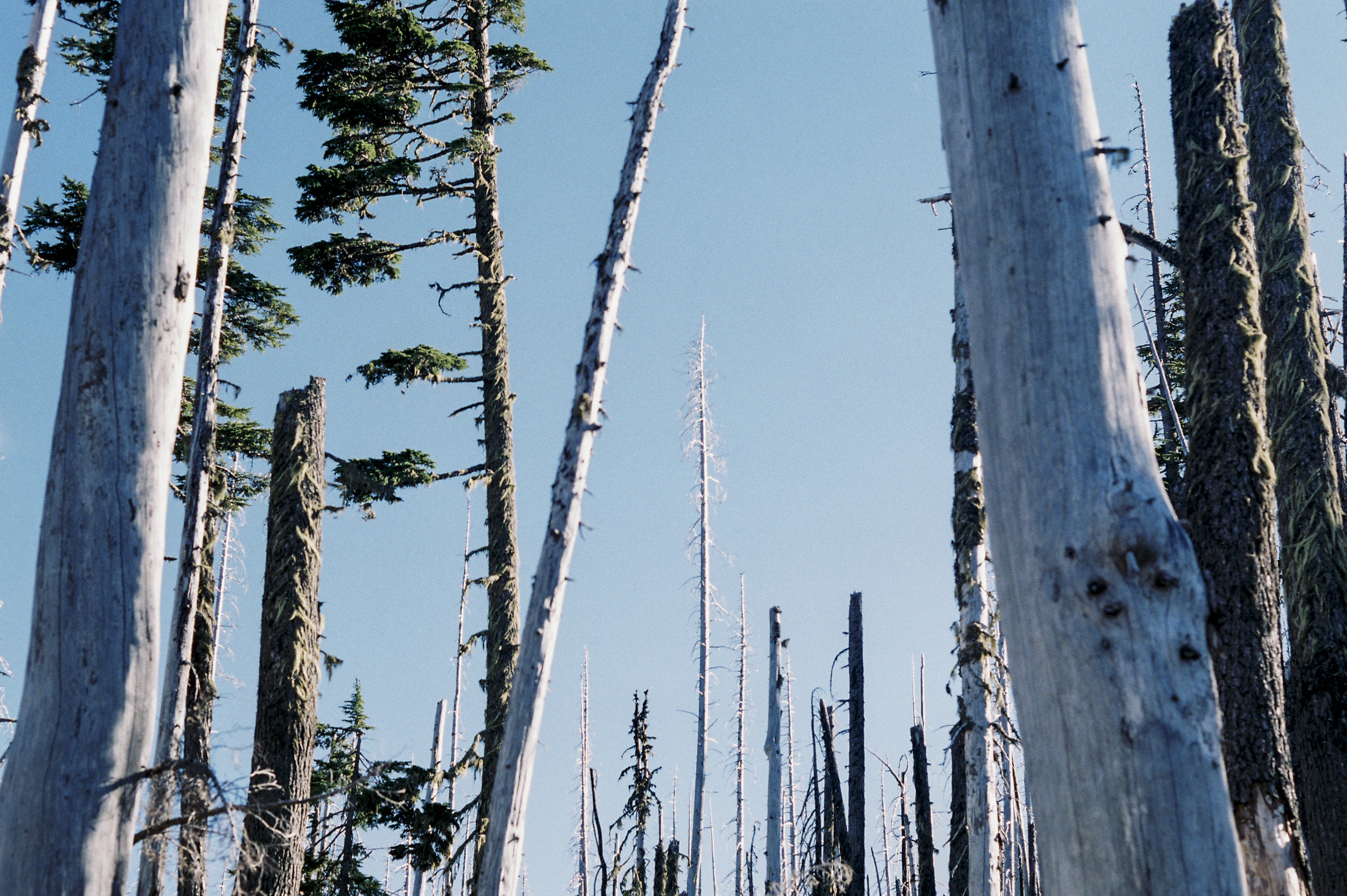 Meadowcreek Trail to Three Fingered Jack outside of Sisters, OR
