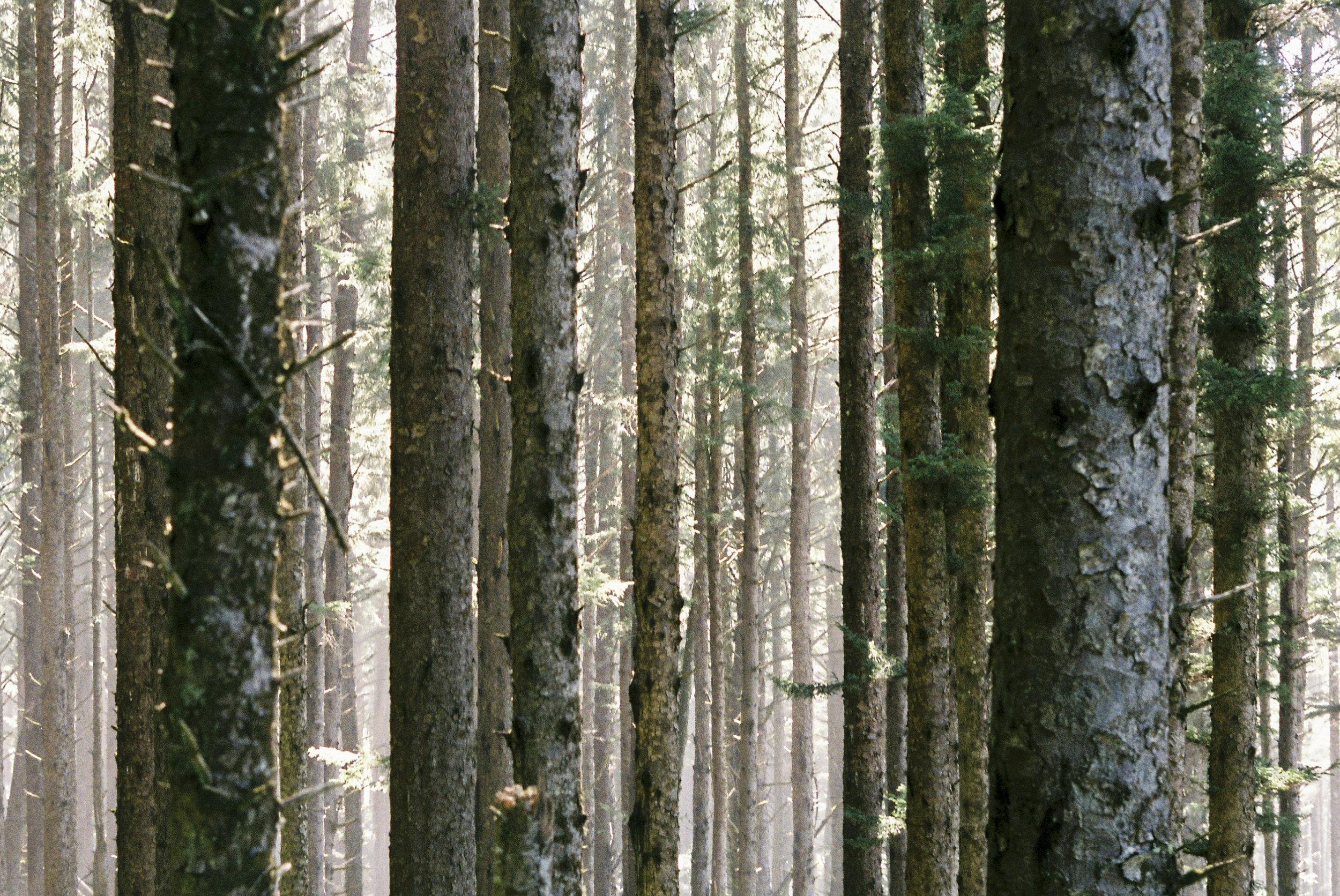 Oregon Coast Trail. Cape Lookout, OR