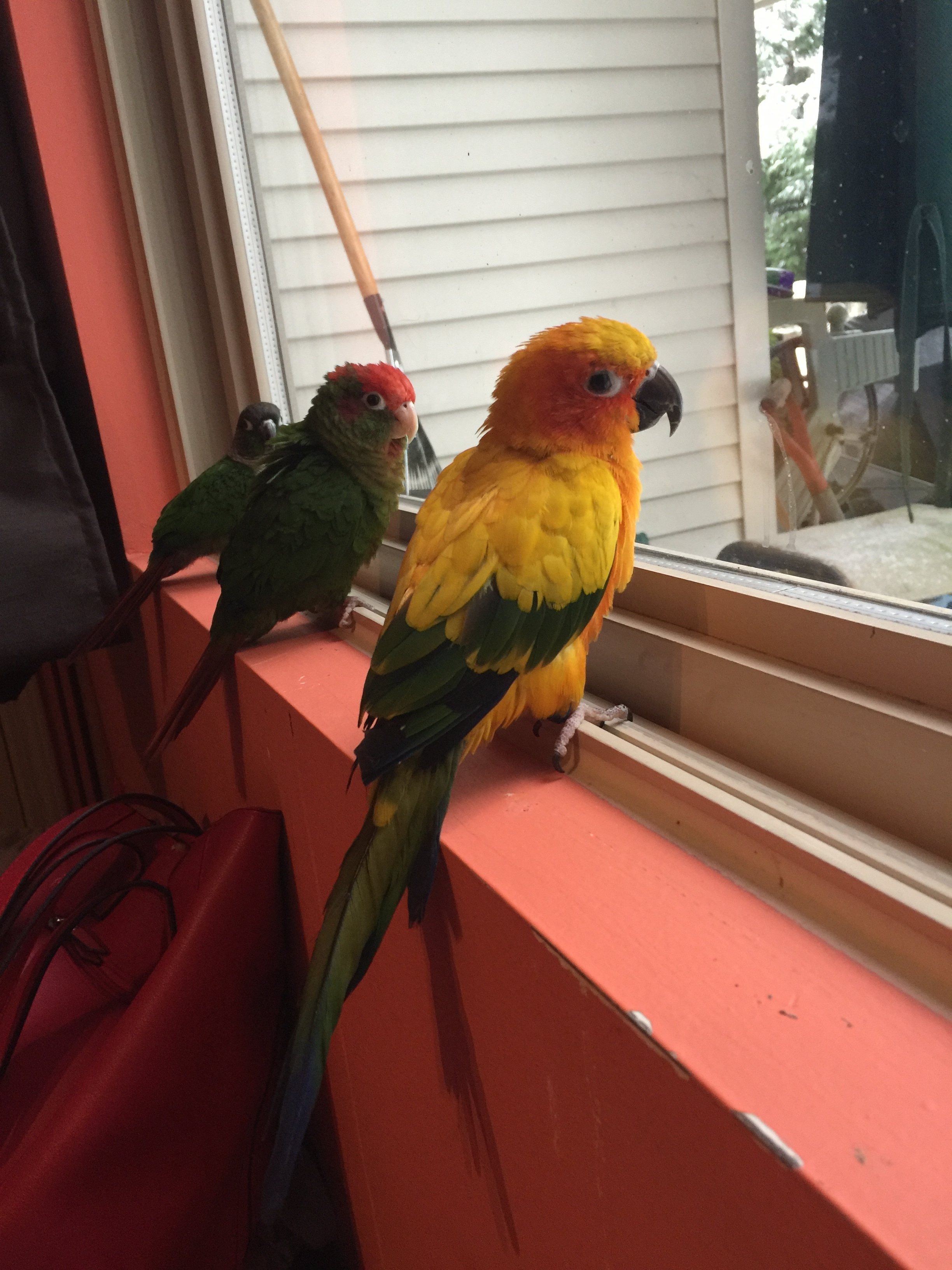 Parrots / Cimpoe Gallery