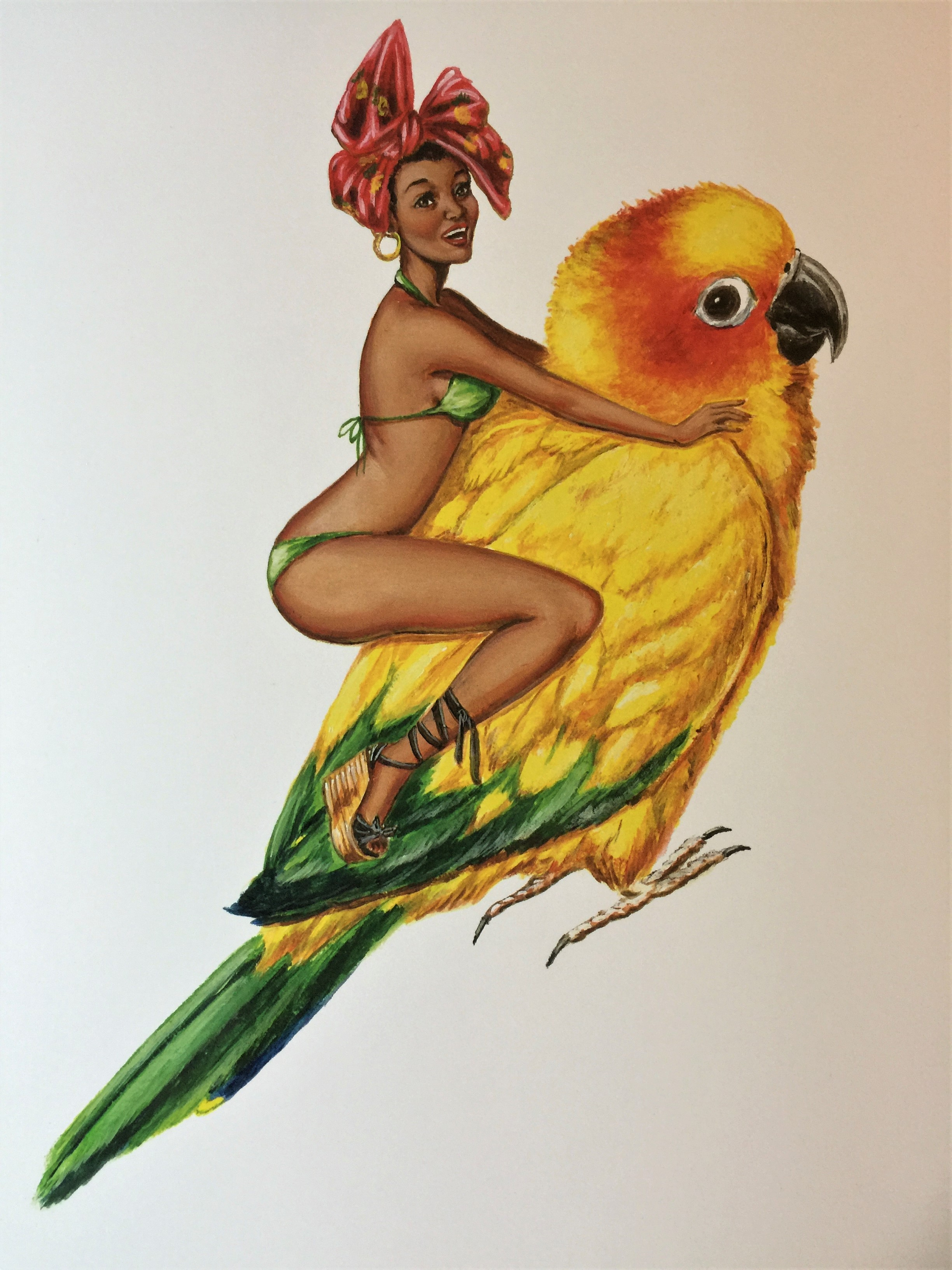 Sun Conure Pin Up.JPG