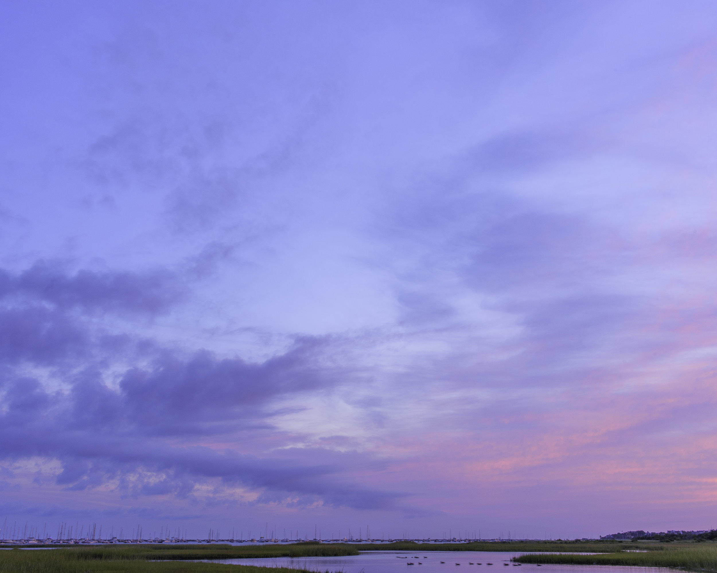 Ducks at Dawn.jpg