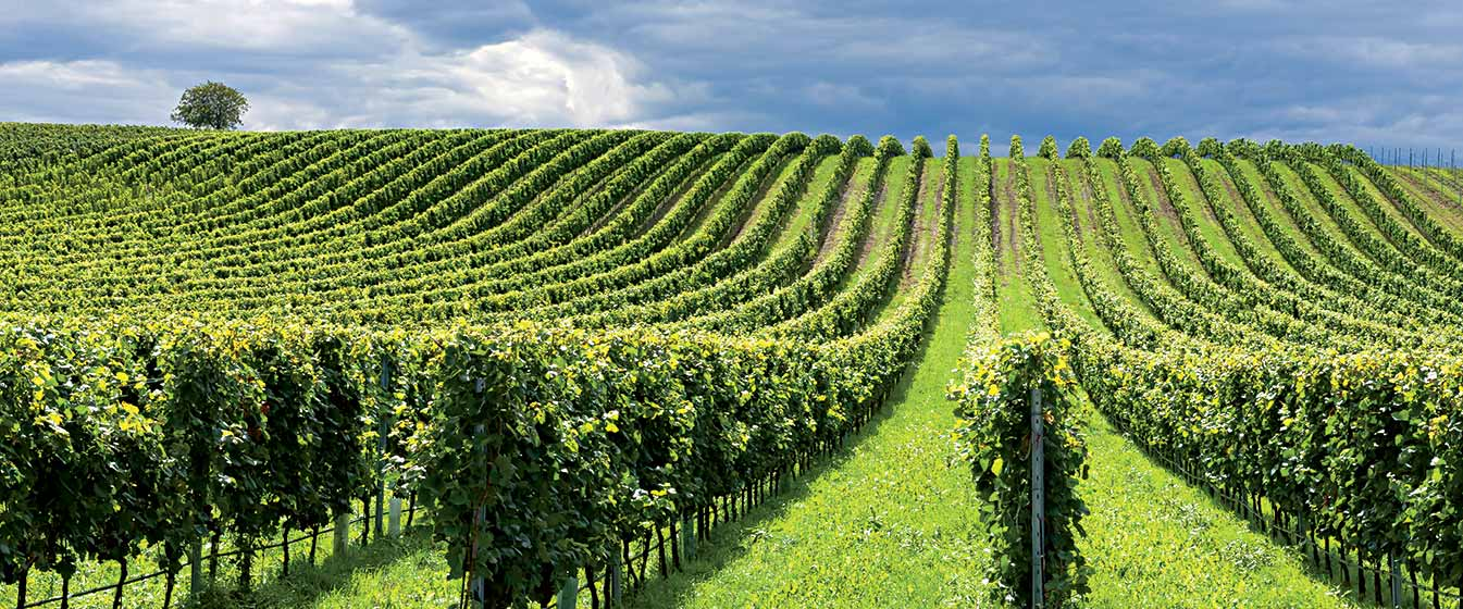 Vineyard Infrastructure - We have a modern, well maintained range of equipment with experienced, caring operators to prepare the ground, plant root stock, establish trellis and irrigation infrastructure to achieve best results