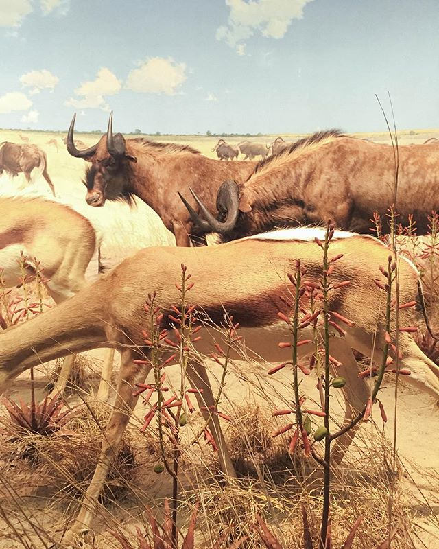 Hot summer in New York. #americanmuseumofnaturalhistory #mood