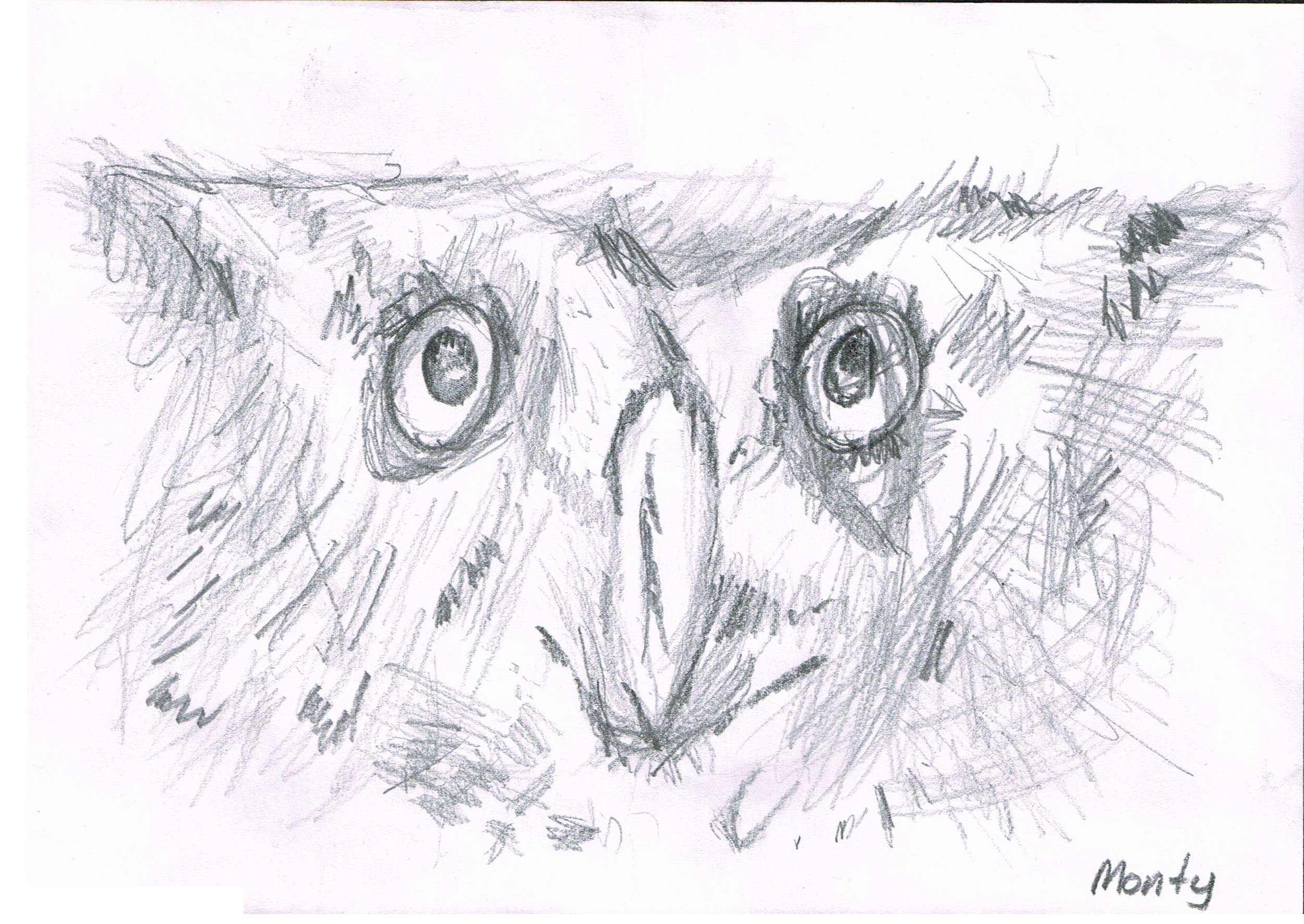 monty_owl.jpg