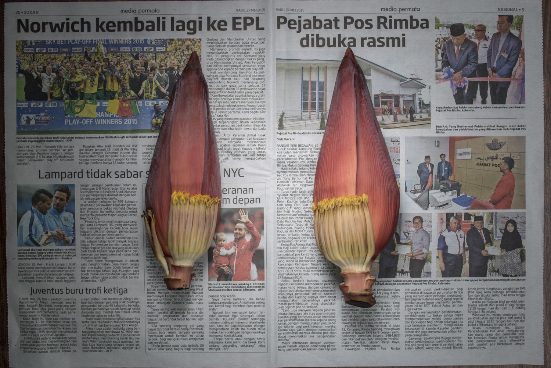 TPL_Brunei3189.jpg