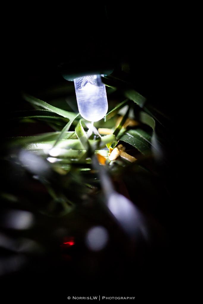 xmas-tree-20121217-008.jpg