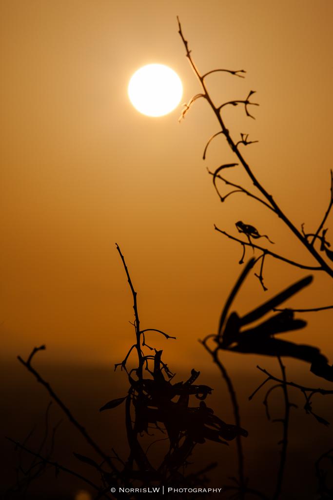 sunrise-20130125-003.jpg