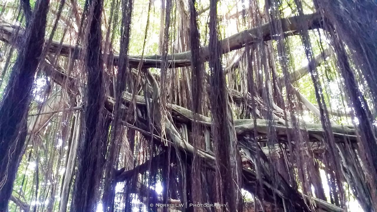 tahiti_landscape-20150522-049.jpg