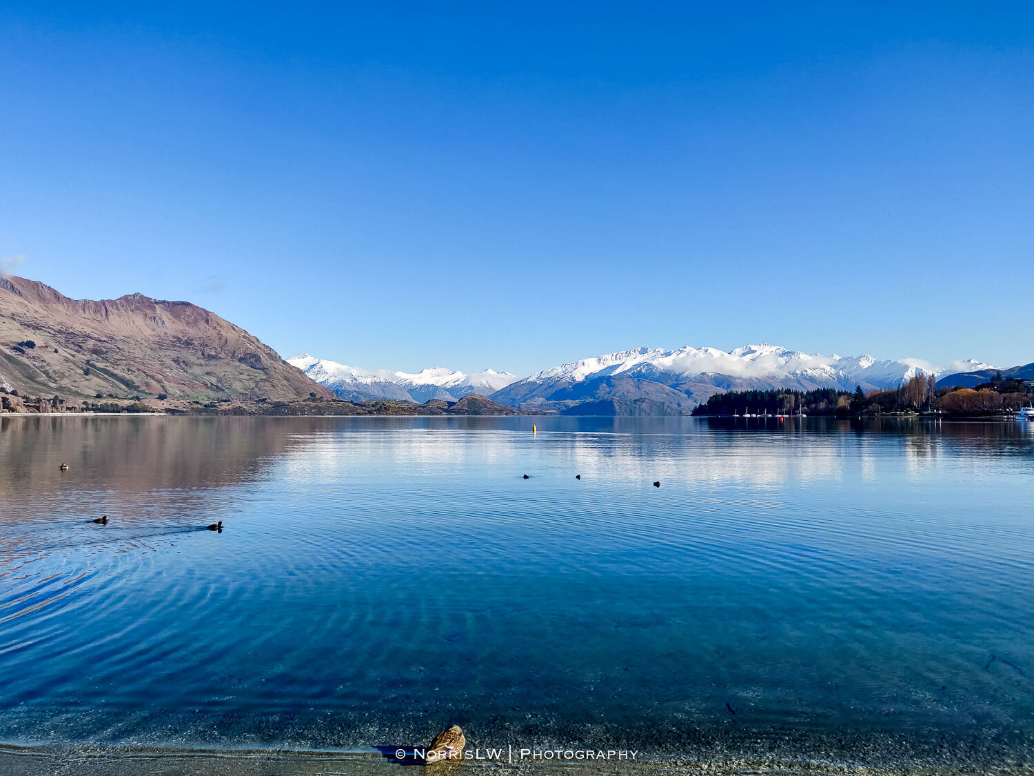Wanaka_South_Island_NZ-20190907-005.jpg