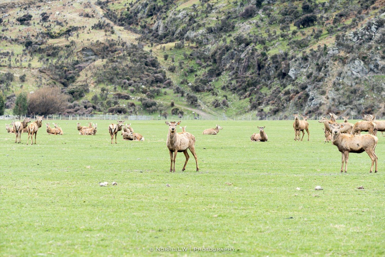 Next stop, more south, Te Anau and Milford Sound.  Mahalo!