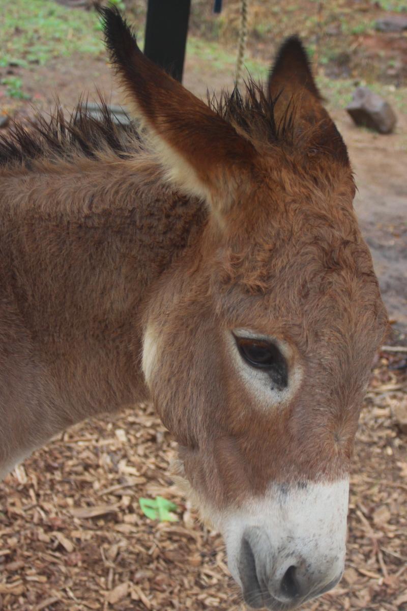 Donkey profile email.jpg