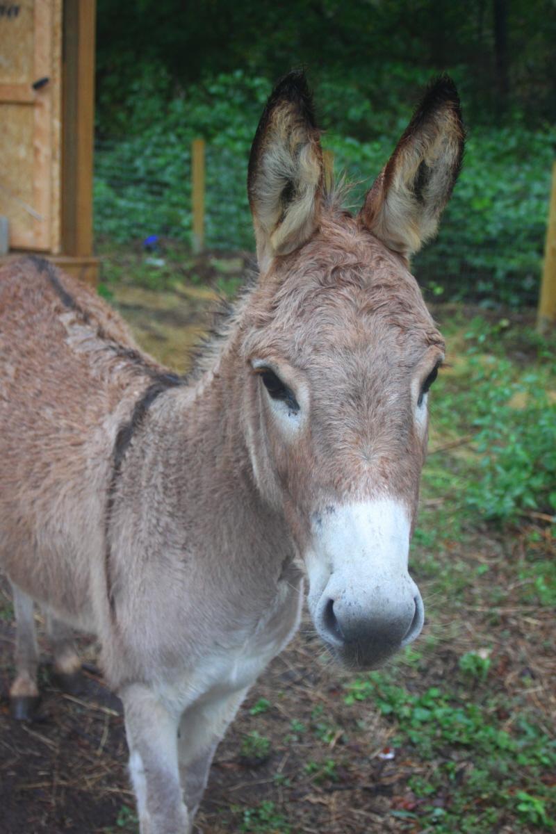 Hello donkey email.jpg
