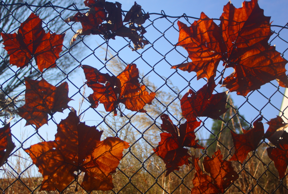 Leaf stained glass closeup email.jpg