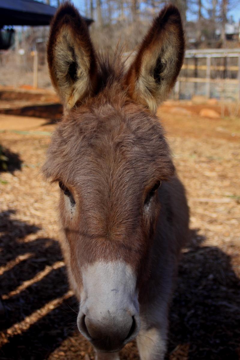 Donkey face email.jpg